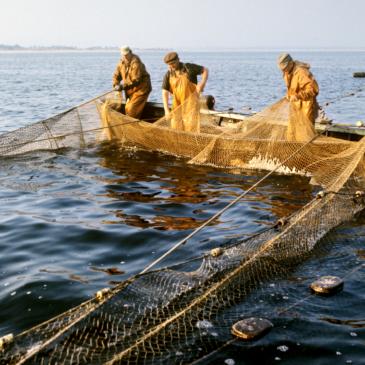 Общественные слушания «Материалов, обосновывающих общий допустимый улов водных биологических ресурсов  на 2018 год»