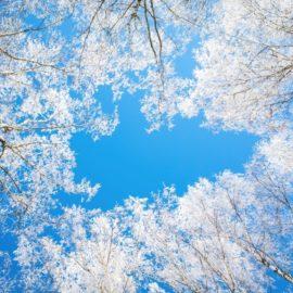 Фотоконкурс «Зимнее кружево Вологодчины»