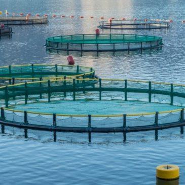 АКВАКУЛЬТУРА: перспективы и проблемы использования малых водоемов
