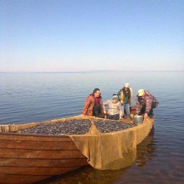 РЫБОХОЗЯЙСТВЕННЫЙ СОВЕТ по Онежскому озеру прошел в Вытегре 15 мая