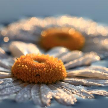 МАКРОМИР СЕРГЕЯ КИЧИГИНА: цветы и грибы