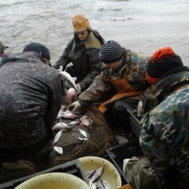 ПОЛЕВАЯ ЭКСПЕДИЦИЯ Вологодского отделения ФГБНУ «ГосНИОРХ» завершилась на Белом озере – важнейшем рыбохозяйственным водоеме региона