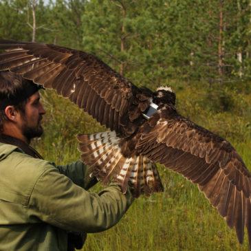 Смена эколого-просветительского лагеря РГО на территории Вологодской области пройдет в Дарвинском заповеднике с 27 мая по 9 июня.