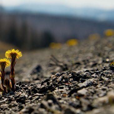 """Всероссийский экологический субботник """"Зеленая Весна"""" – масштабная социально значимая федеральная акция, пройдет с 20 апреля по 20 мая 2019 года в шестой раз."""