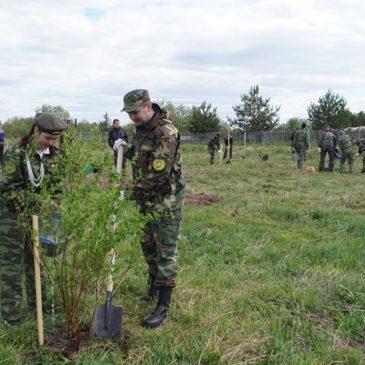 Вологодчина присоединилась к Всероссийскому дню посадки леса.