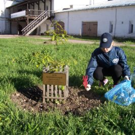 В Вологде подготовили к вегетационному сезону дубок-потомок  дуба Петра Великого.