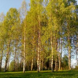 Подведены итоги Всероссийского конкурса «Моя малая Родина: природа, культура, этнос».