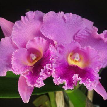 Музей Орхидей и Ботанический Сад предлагают школьникам принять участие в конкурсе и вырастить цветущую орхидею.