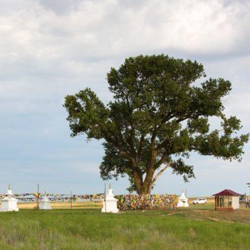 Главным деревом страны-2019 на конкурсе «Российское дерево года» стал «Одинокий тополь» из Калмыкии.