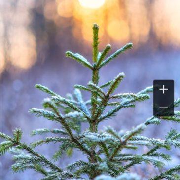 Вологодское отделение РГО поздравляет всех с наступающим Новым годом!