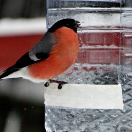 Приглашаем принять участие в областном конкурсе «Покормите птиц зимой!».