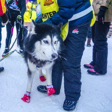 Тотьма и Школа путешественников Федора Конюхова готовятся принять этап кубка мира по ездовому спорту.