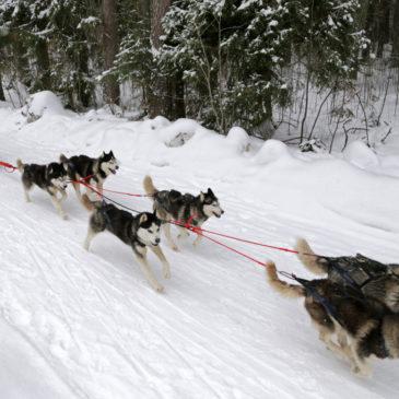 """Федор Конюхов поделился своим опытом со спортсменами гонок на собачьих упряжках """"Русский Север-2020"""" в Тотьме."""