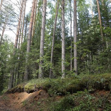 Вологда занимает четвертое место в рейтинге «зеленых щитов», которые созданы в 41 регионе России.