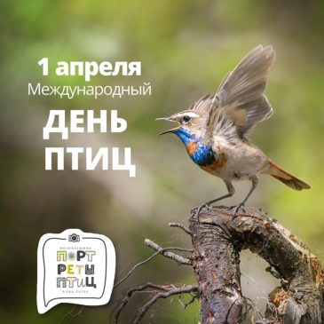 Ежегодно 1 апреля отмечается Международный день птиц.