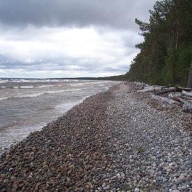 Дендрохронологи РГО побывали на Онежском озере с целью поиска артефактов, связанных с вытегорской ладьей.