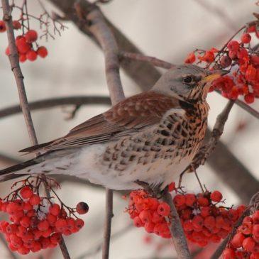 Об осенней жизни птиц рассказал школьникам доцент Вологодского госуниверситета.