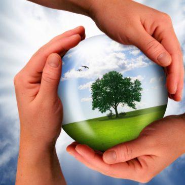 Об экологическом образовании говорили участники Российского научного форума «Экология и общество: баланс интересов»