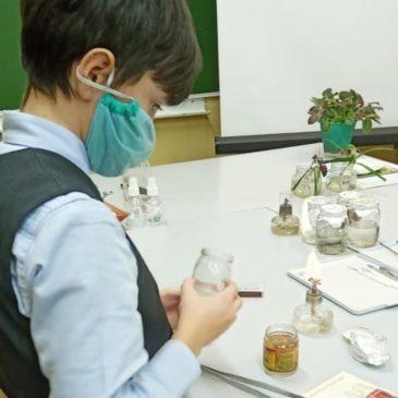 Юные ученые повторили опыт Готре и научились выращивать каллусную культуру
