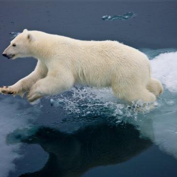"""Приём работ на отборочный этап конкурса """"Арктика"""" открыт до 17 января 2021 года включительно."""
