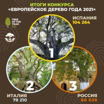 """21 марта – Международный день лесов, в конкурсе """"Европейское дерево 2021"""" Россия стала третьей"""
