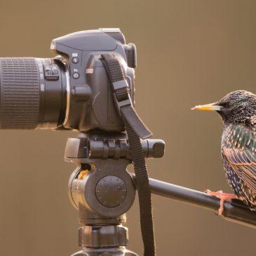 Наблюдайте за птицами и получайте призы. Фенологический конкурс «Чудо в перьях»