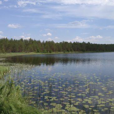 Озера таежной зоны исследуют в течение пяти лет на грантовые средства ВРО РГО