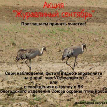 """Акция """"Журавлиный сентябрь"""" будет проходить на Вологодчине в течение месяца"""