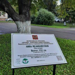 Информационная табличка появилась у липы, посаженной в XIX веке, в Вологде